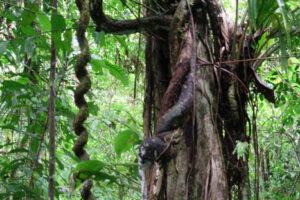 Ecuador, Amazon, Shuar indigenous WEB5