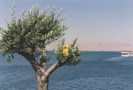 Sea Galilee