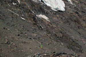 Mt. Kailash, 2002, Second flag at Drolma pass, Wangmo Dixey