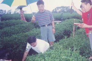 Taiwan-6C WEB