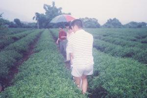 Taiwan-6D WEB