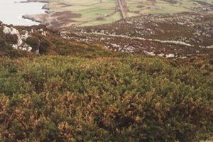 UK Wales, Hollyhead-1A WEB