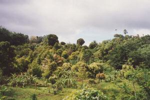 Grenada-2B WEB