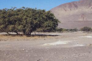 Peru, Nazca-1A WEB