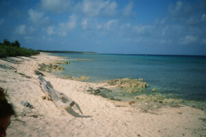 Cayman, bloody bay 2 WEB