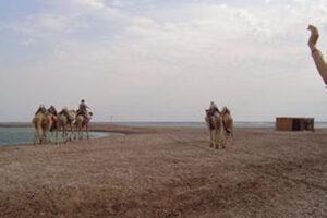 Egypt, Sinai, Ras Abou Ghaloum 4 WEB