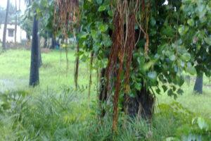 INDIA Patna WEB1