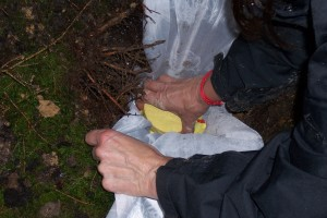 5_placing the vase 100m aside this point in the forest