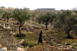 Israel, Bethlehem 3 WEB