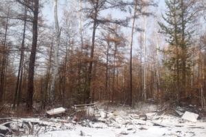 Reports Yakutiya - Photo 17