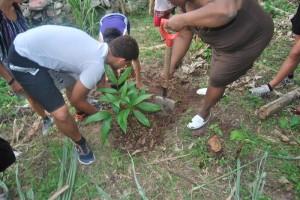 3 Planting Tree